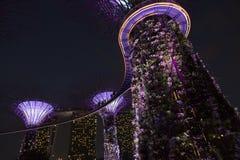 Singapur Supertrees en jardines por la bahía Imagen de archivo libre de regalías