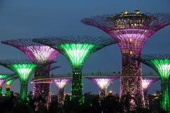 Singapur Supertrees nachts Stockfoto