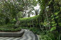 SINGAPURA - 19 DE JANEIRO DE 2016: vista cênico do trajeto e das árvores imagens de stock royalty free