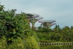 SINGAPURA - 12 DE MAIO: Jardins pela baía o 12 de março de 2014 em Singap Fotografia de Stock Royalty Free