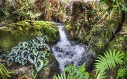 Singapure botanisk trädgård arkivfoto