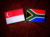 Singapurische Flagge mit südafrikanischer Flagge auf einem Baumstumpfisolat lizenzfreies stockbild