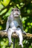 Singe à la forêt de singe Image libre de droits