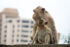 Singe animal abstrait, amour se sentant avec sa famille Image libre de droits