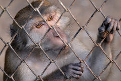 Singe au zoo Images libres de droits