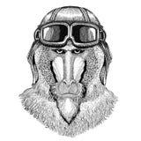 Singe, babouin, chien-singe, aviateur en cuir de port de casque de singe, motard, illustration tirée par la main de moto pour le  Images libres de droits