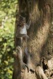 Singe dans l'arbre photo libre de droits