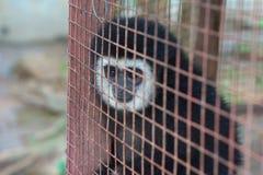 Singe dans la cage photographie stock libre de droits
