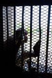 Singe dans la cage images libres de droits