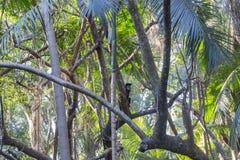 Singe dans la forêt photos libres de droits