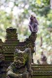 Singe dans la forêt d'ubud, Bali Images libres de droits