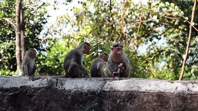 Singe dans la forêt tropicale banque de vidéos