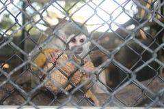 Singe dans le zoo Photographie stock