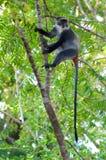 Singe dans les bois Image libre de droits