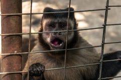 Singe dans un zoo images stock