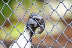 Singe dans une cage Images stock