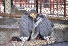 Singe dans une cage Photographie stock libre de droits