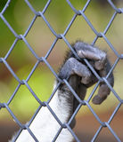 Singe dans une cage Photos stock