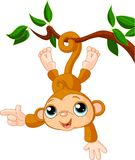 Singe de chéri sur une apparence d'arbre Photos libres de droits