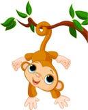 Singe de chéri sur un arbre Images libres de droits