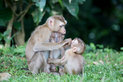 Singe de mère et de chéri Image libre de droits