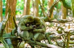 Singe de Macaque Photographie stock