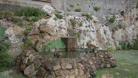 Singe de macaque de Barbarie au Gibraltar sur un mur banque de vidéos