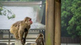 Singe de macaque japonais avec son enfant se tenant dessus Images libres de droits