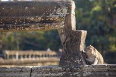 singe de Macaque Long-coupé la queue se reposant sur des ruines antiques d'Angkor Wa Photographie stock libre de droits