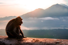 Singe de silhouette dans les montagnes Images libres de droits