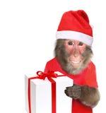 Singe drôle avec le cadeau de Noël Photographie stock