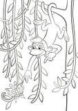 Singe en accrochant sur la branche d'arbre Photos stock