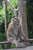 Singe en parc national, Thaïlande Photos stock