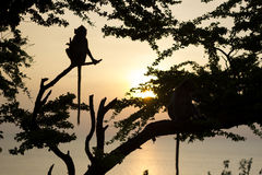 Singe et coucher du soleil photographie stock libre de droits