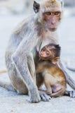 Singe et l'petit animal Photo libre de droits