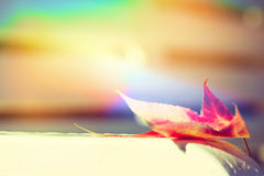 Singe Fall Leaf Royalty Free Stock Photo