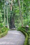 Singe Forest Footpath Photos libres de droits