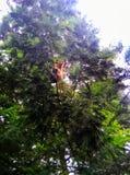 Singe haut dans l'arbre photo libre de droits
