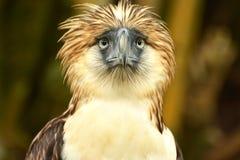 Singe mangeant l'aigle Photo libre de droits