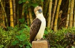 Singe mangeant l'aigle Image libre de droits