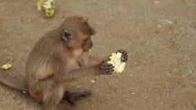 Singe mangeant la banane clips vidéos