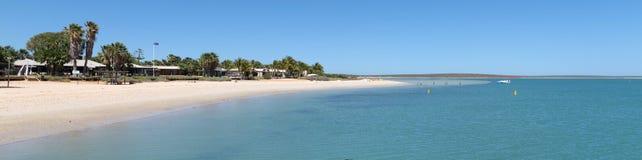 Singe Mia, baie de requin, Australie occidentale photographie stock