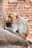 Singe mignon Photo stock