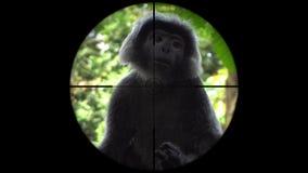 Singe noir de gibbon vu dans la portée de fusil d'arme à feu Chasse de faune Animaux mis en danger, vulnérables, et menacés de po banque de vidéos