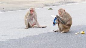Singe ou macaque sauvage léchant la crème glacée du packgage de papier de crème glacée  clips vidéos
