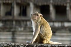 Singe rhésus chez Angkor Wat images stock
