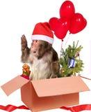 Singe Santa Claus de Noël dans une boîte en carton avec des cadeaux Photo stock