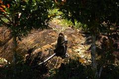 Singe se reposant sous des palmiers sur l'île de Ko Chang en Thaïlande en avril 2018 photographie stock