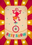 Singe sur la bicyclette Photographie stock libre de droits