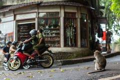 Singe sur la rue au centre d'Ubud Images stock